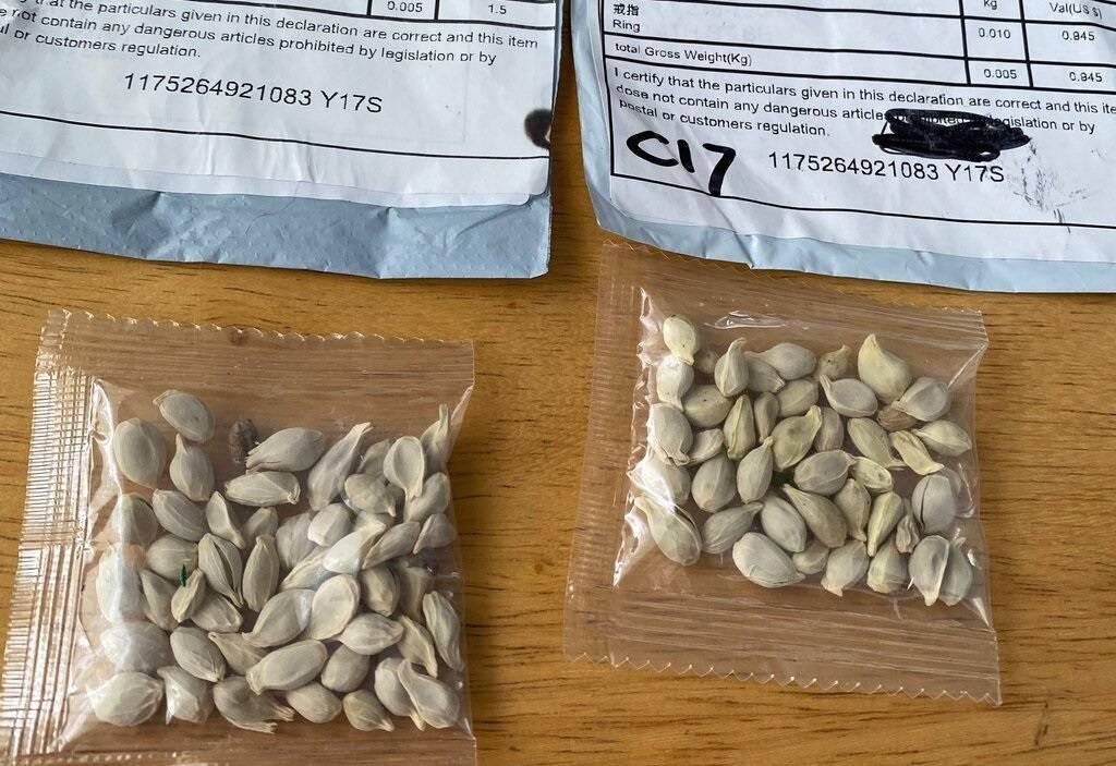 """Autoridades americanas ficam em alerta com """"sementes misteriosas"""" da China"""