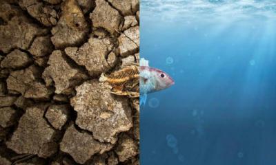 A maioria dos brasileiros dizem que as mudanças climáticas são 'risco catastrófico'